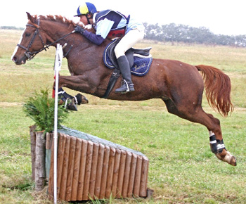Sophie in action during a horse trials competition at home, on the Selle Francais Loriot de Couston.