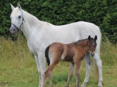 Cressie's Pilot colt is a growing lad!