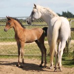 Latest pics of our Pilot colt