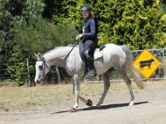 Mares represent Aurora at Mt Linton's Jeff Farm ride