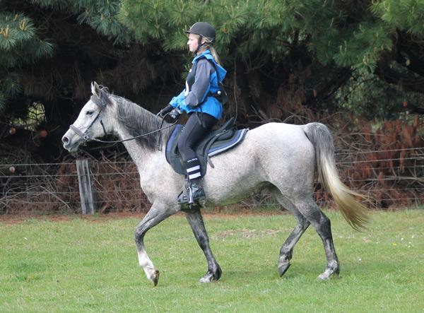 Aurora Naseebah finishing her first ride of the season, October 2015.